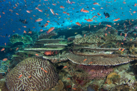 A coral reef with orange fish swimming around